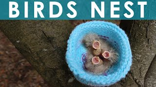 How to Knit a Birds Nest for Rescued Wildlife Animals