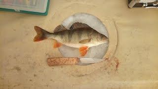 Рыбалка на хищника! Якутия Yakutia