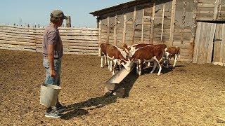 Господдержка помогает фермерам Ленинского района развивать мясное животноводство