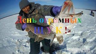 Зимняя рыбалка на щуку в якутии
