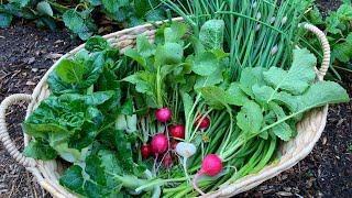 Morning Garden Harvest! PNW & Blooper!