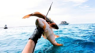 2 FISH 1 SHOT Coastal Camping To Spearfishing In The Boat Catch And Cook   Ep 69