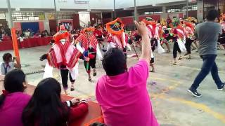 Carnaval de mollomarka