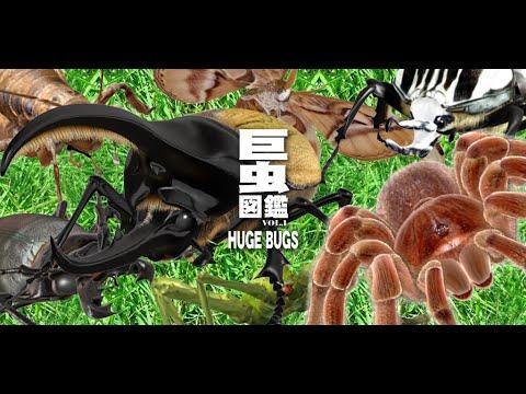 Video of 巨虫図鑑ライト版
