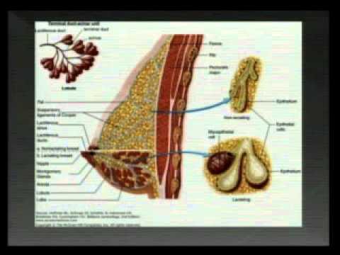 Inkubációs periódus a helminthiasis