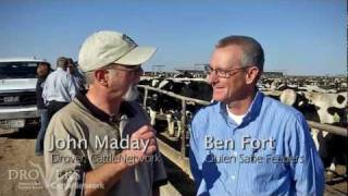 Turning Holsteins into finished beef steers