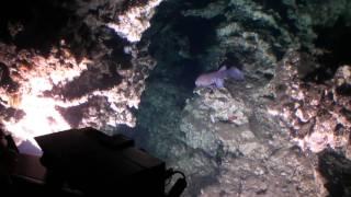 Notre plongée à 312 m