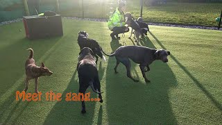 8 Dog Socialisation And Confidence Session At NCAR
