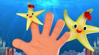 Sao Biển Gia Đình Ngón Tay | Vần Điệu Cho Trẻ Sơ Sinh | Kids Songs | Starfish Finger Family