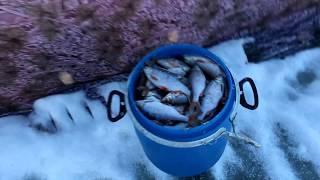 Сахривер отчет о рыбалке апрель 2020