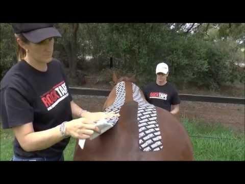 Equine Spinal Dorsis