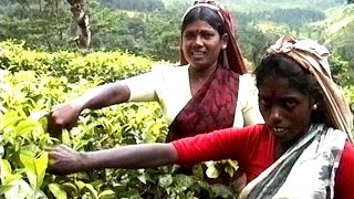 preview picture of video 'Sri Lanka - Nuwara Eliya - Teeanbau - Betelnuss Markt - Ceylon Tee'