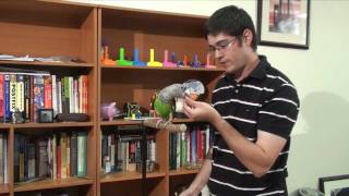How to Teach Parrot Turn Around Trick