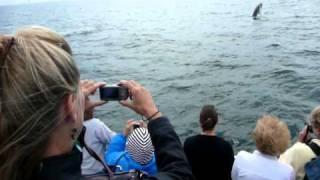 whale 01 09 08 2010 whale watching cruise boston кити киты