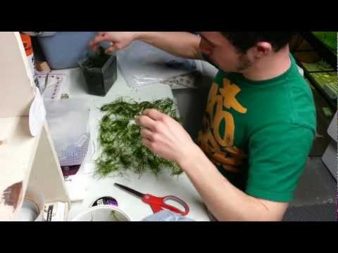 Video 1. DIY Java Moss Wall or Carpet
