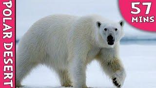 Learning Videos - Arctic Tundra And Polar Desert - Learning  Videos For Kids - Education Videos