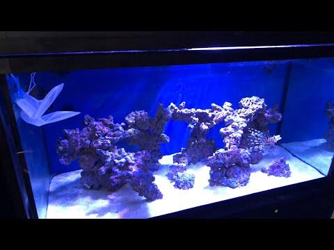 The shark eggs in my aquarium