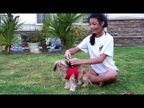 (Small Dog Harness Vest) Replaces Collars - Best Dog Harness Los Angeles