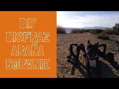 DIY Disfraz de araña para tu mascota//octubre tematico