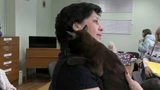Клуб бурманских кошек БУРМА системы PCA