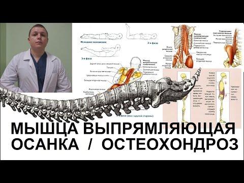 Сутулость искривление позвоночника и спины