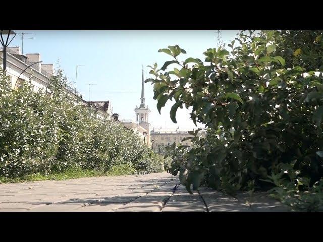 Сорняки, нескошенная трава и поваленные деревья