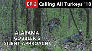 Public Land Longbeards in Alabama - Calling All Turkeys