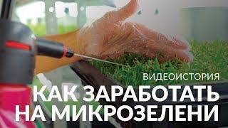 Бизнес на травке | Создатель фермы микрозелени о своем необычном бизнесе и помощниках c YouDo