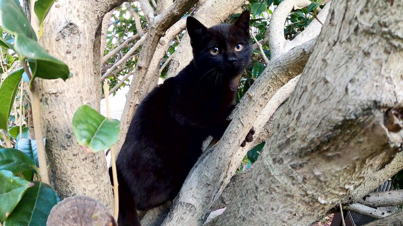 木から降りられない子猫を見守っていると・・・