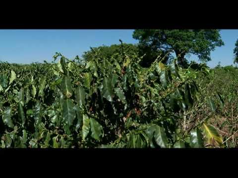 Técnicos agrícolas podem assinar projetos de maior valor