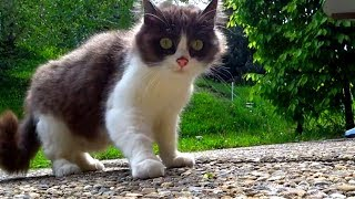 Shy & injured stray kitten visits us in the mountains every day (UPDATE) Faith in Humanity Restored
