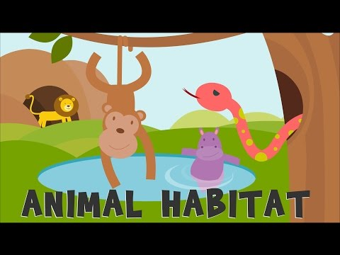 Animal Habitats   Nexus P6 Science