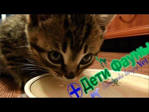 Лямблии у кота симптомы и