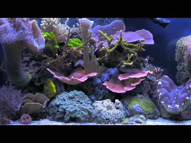 BluScenes: Scenic Aquarium (Coral Reef tank) - NEW!