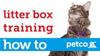 How to Train Your Cat to Use a Litter Box (Petco)