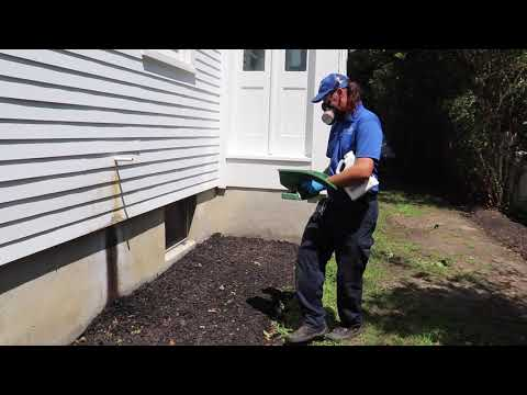 Odorous House Ants Causing a Stink in Farmingdale, NJ