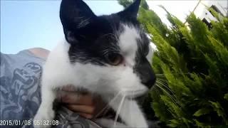 Kot Kontra Wąż Czyli Walka Kropeczki O Przetrwanie Most Popular