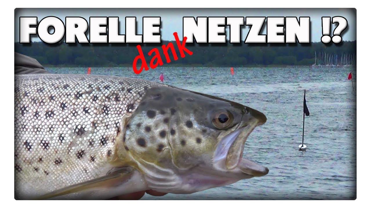 Angler oder Fischer - wer bekommt die Meerforelle? Netze im knietiefen Wasser