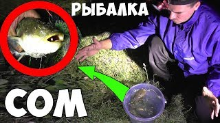 РЫБАЛКА на СОМА - КЛЮЁТ как КАРАСЬ - ПОЙМАЛ 2 СОМА