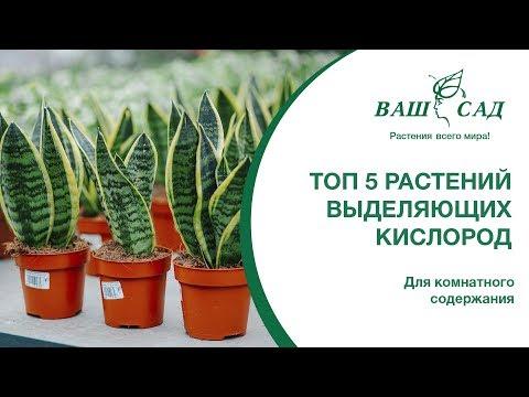 ТОП 5 растений производящих много кислорода. Ваш сад