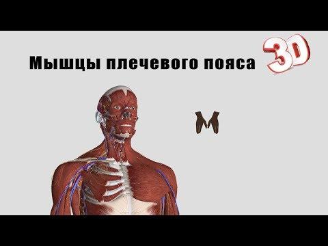 Остеохондроз шейного отдела и тревога