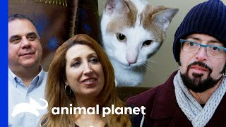 Owners Blame Woody For The Death Of Their Other Cat | My Cat From Hell by Animal Planet