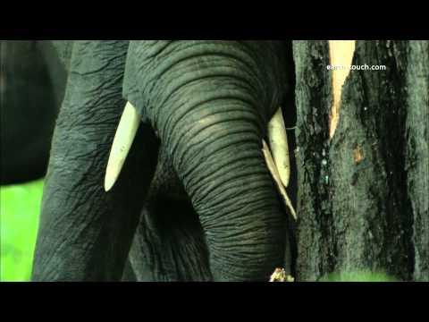 Sloní stádo zblízka