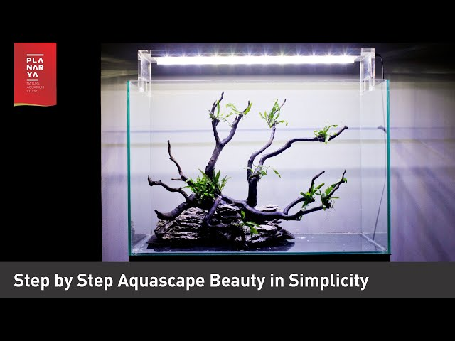 Step by step Aquascape Beauty in Simplicity