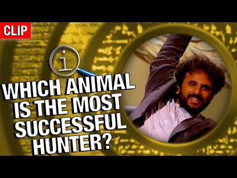 QI | The Most Successful Hunter?