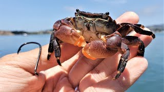 Fishing with SHORE CRABS and RUBBER BANDS!!