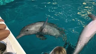 Recovering After Hurricane Irma at Clearwater Marine Aquarium