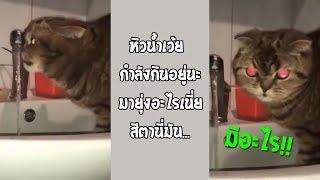 เมื่อเจ้าเหมี๋ยวกำลังกินน้ำ แล้วโดนกวนจะเกิดอะไรขึ้น?... #รวมคลิปฮาพากย์ไทย