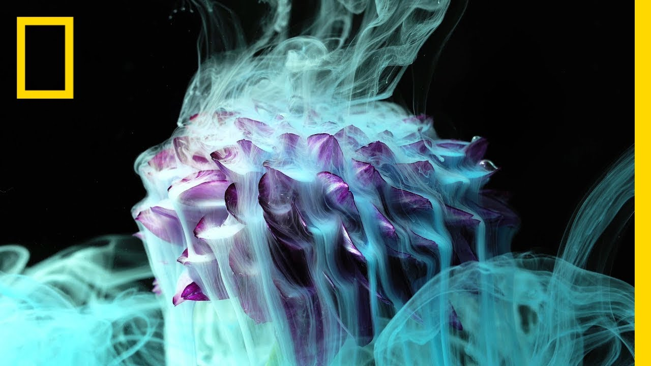 See the Stunning Beauty of Flowers Exposed to Fire, Ice, and Ink | Short Film Showcase thumbnail