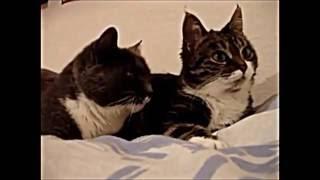 Cuộc nói chuyện giữa chó và mèo